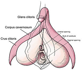 275px-Clitoris_anatomy_labeled-en